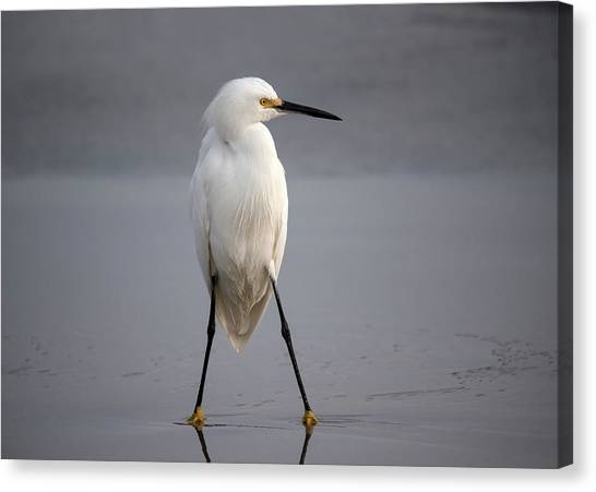 Egrets Canvas Print - Fighter by Hao Jiang