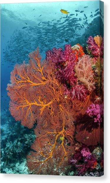 Fiji Fish And Coral Reef Canvas Print by Jaynes Gallery