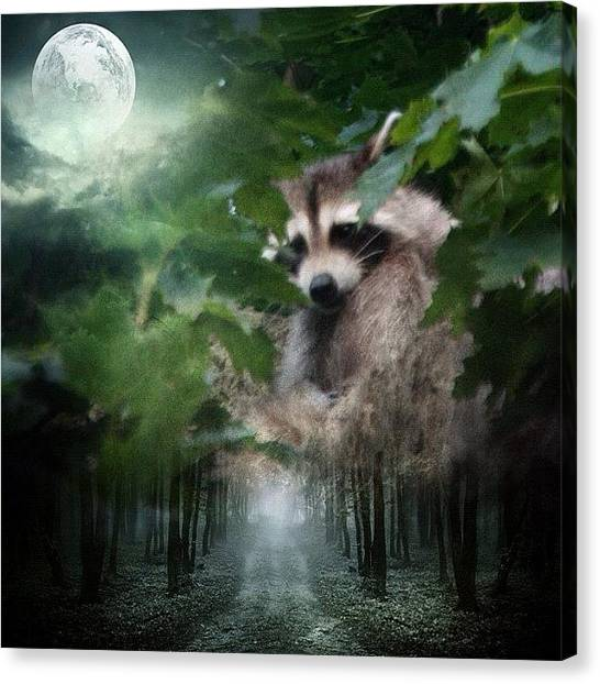 Raccoons Canvas Print - #filtermania2_scenery_challenge by Jan Pan
