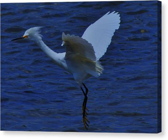 Saltwater Life Canvas Print - Final Approach by Eugene Warmoth