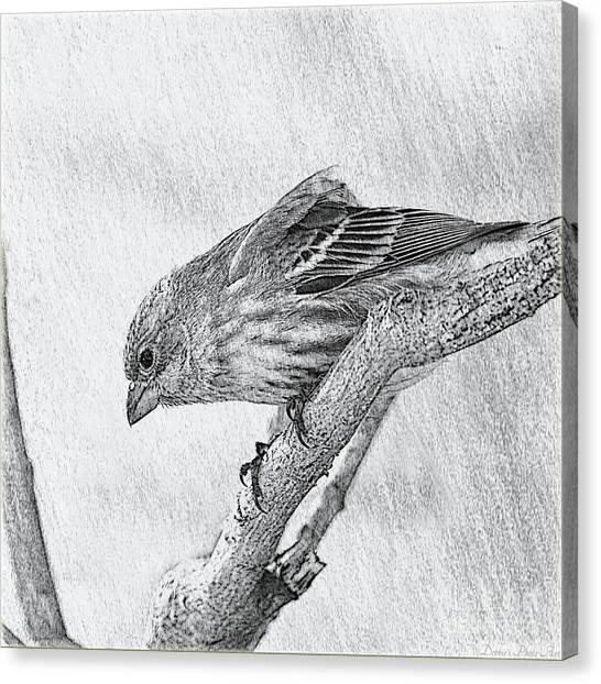 Finch Digital Sketch Canvas Print