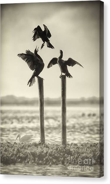 Find Your Own Perch Canvas Print