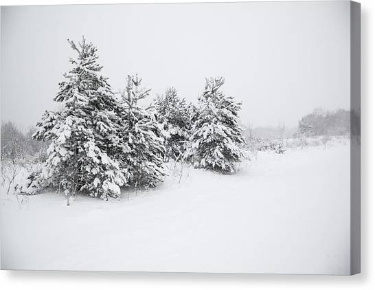 Fir Trees Covered By Snow Canvas Print