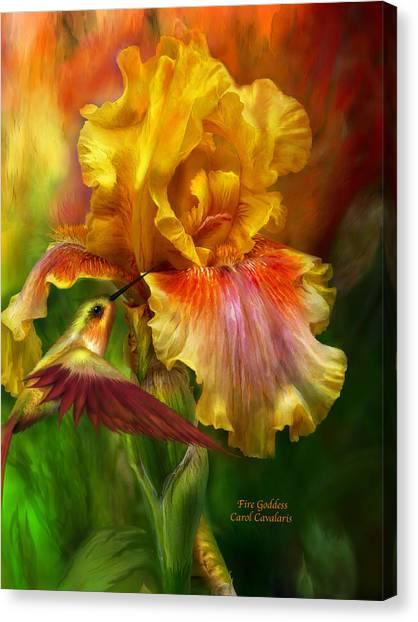 Irises Canvas Print - Fire Goddess by Carol Cavalaris