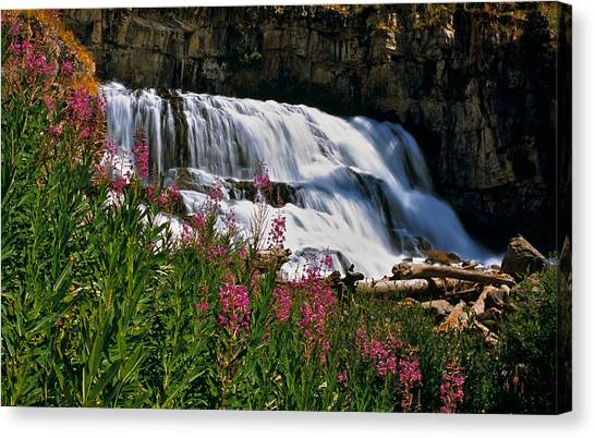 Fireweed Blooms Along The Banks Of Granite Creek Wyoming Canvas Print