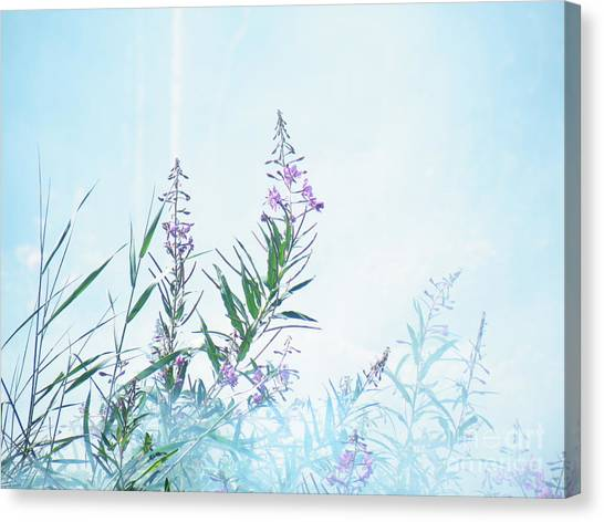 Fireweed Number Two Canvas Print