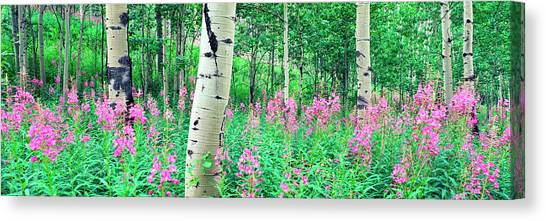 Teton National Forest Canvas Print - Fireweeds Flowers Among Aspens by Panoramic Images