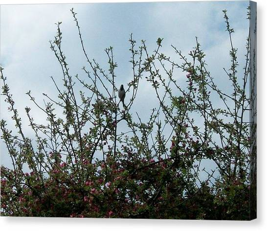Apple Tree Canvas Print - First Bird Of Spring by Mary Kritschgau