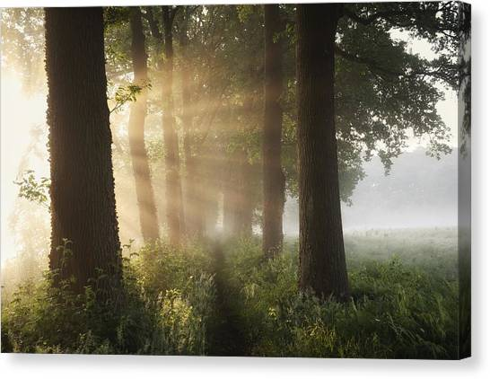 Rural Canvas Print - First Day Of Summer by Vincent Croce