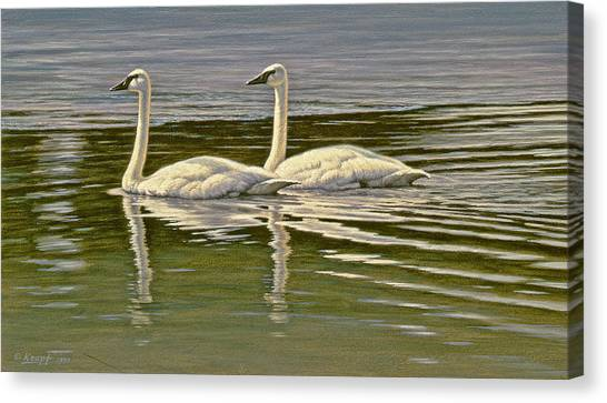 Water Birds Canvas Print - First Open Water - Trumpeters by Paul Krapf