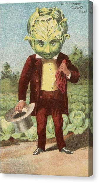Vegetable Garden Canvas Print - First Premium Cabbage Head by Aged Pixel