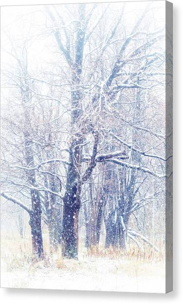 First Snow. Dreamy Wonderland Canvas Print