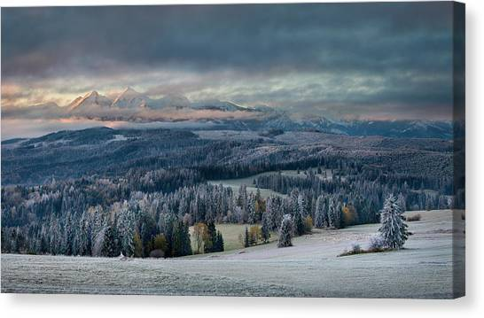 Pine Trees Canvas Print - First Touch Of Winter by