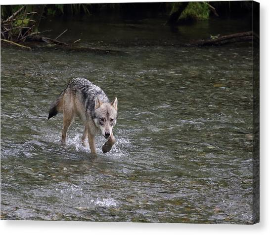 Fish Creek Wolf Canvas Print