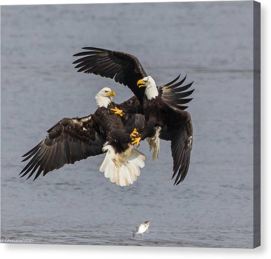 Fish Fight  Canvas Print by Glenn Lawrence