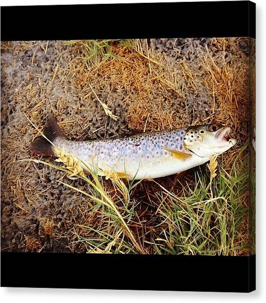 Trout Canvas Print - #fish #fishing #flyfishing #trout by Mark Jackson