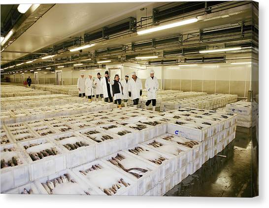Fish Market Canvas Print - Fish Market by Gustoimages/science Photo Library