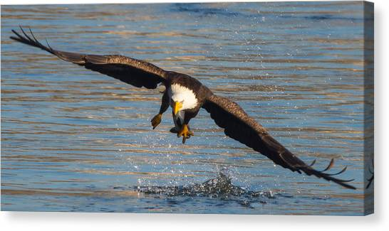 Fish On The Go  Canvas Print by Glenn Lawrence