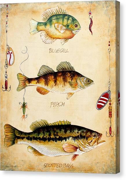 Trout Canvas Print - Fish Trio-c by Jean Plout