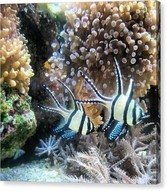 Tropical Fish Canvas Print - #fish #tropical by Sarah Truman
