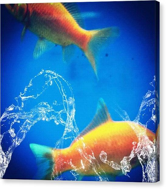 Tanks Canvas Print - Fishes  by John Williams