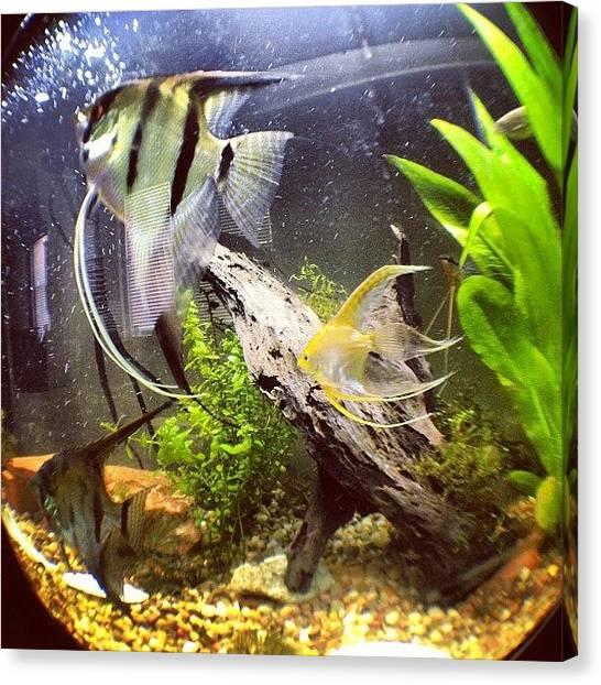 Bands Canvas Print - Fisheye N My Fish Tank by Clifford Drake