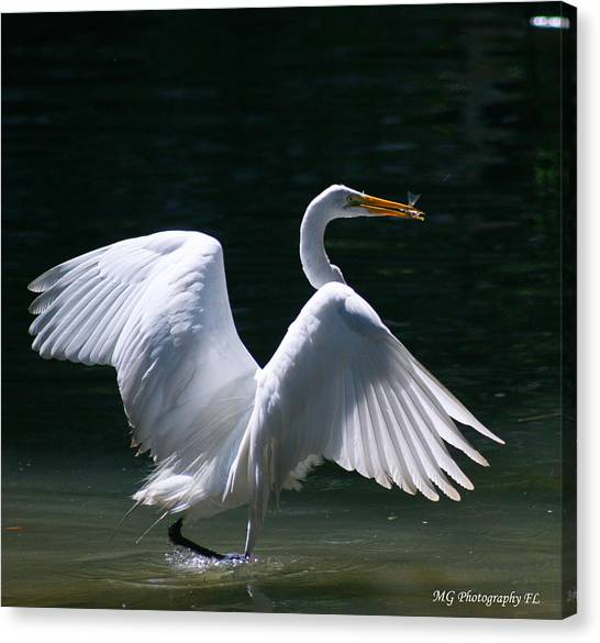 Fishing Egret Canvas Print