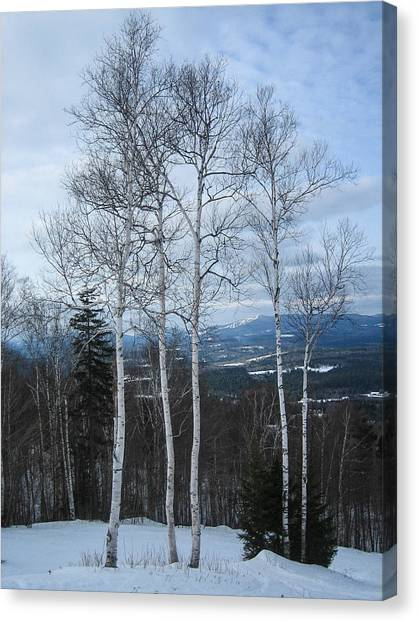 Five Birch Trees Canvas Print