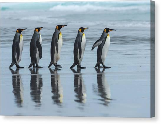 Penguins Canvas Print - Five Online by Miquel Angel Art??s