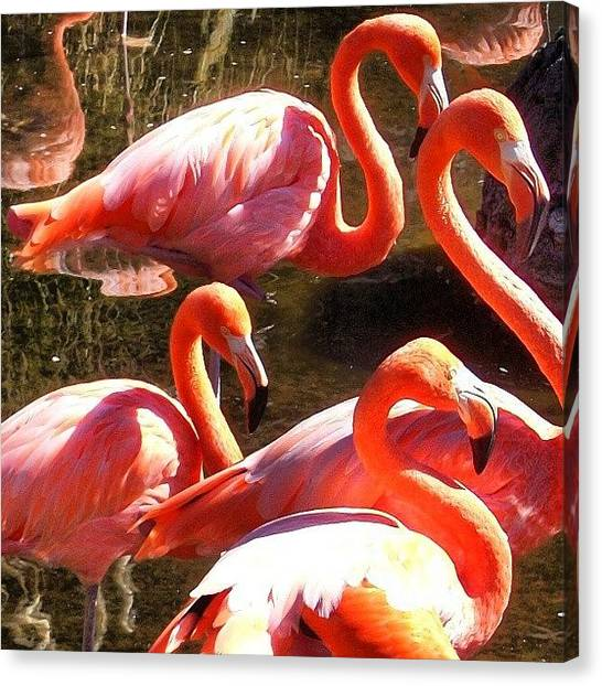 Flamenco Canvas Print - Flamencos. #flamencos #summer #madrid by Juan Parafiniuk
