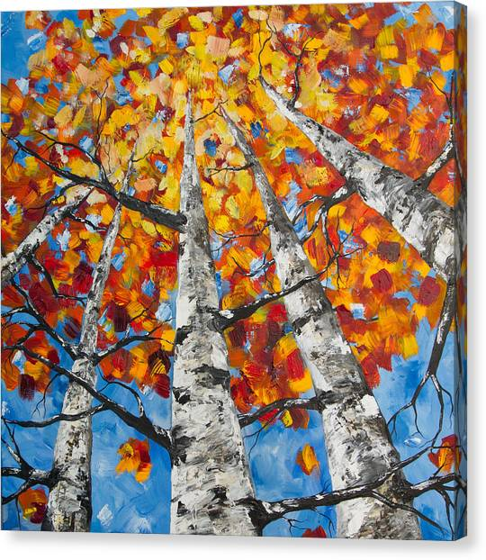 Flaming Aspens Canvas Print