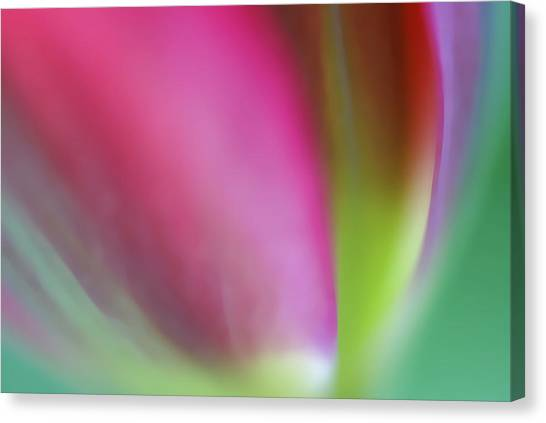 Flaming Tulip Canvas Print