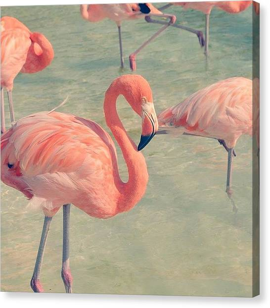Flamingos Canvas Print - #flamingo #bird #pink #loveit #tropical by Ellen Baetens