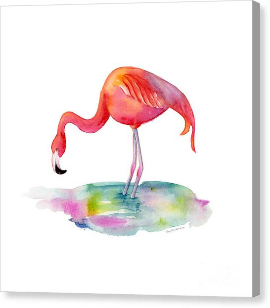 Flamingos Canvas Print - Flamingo Dip by Amy Kirkpatrick