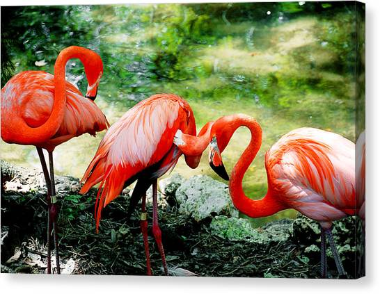 Flamingo Friends Canvas Print