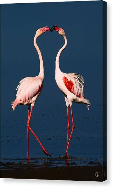 Flamingo Heart Canvas Print by Jeppsson Photography