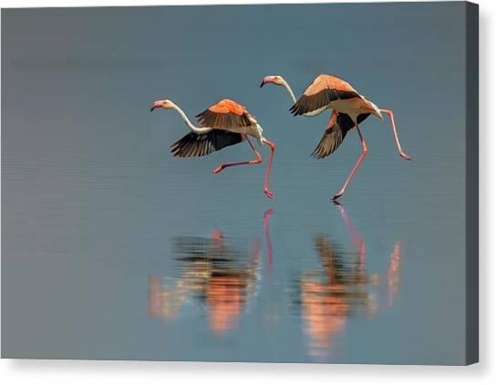 Flamingo Landing Canvas Print by Yun Wang