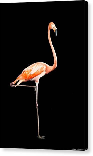 Flamingo On Black Canvas Print
