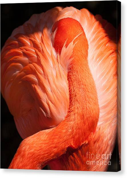 Flamingo Resting Canvas Print