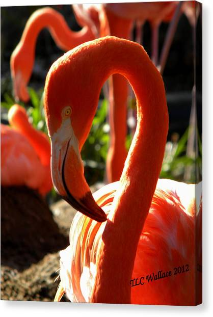 Flamingo Canvas Print by Tammy Wallace