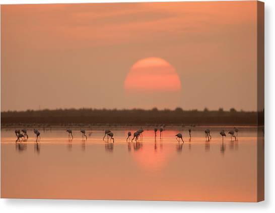 Deltas Canvas Print - Flamingos At Sunrise by Joan Gil Raga