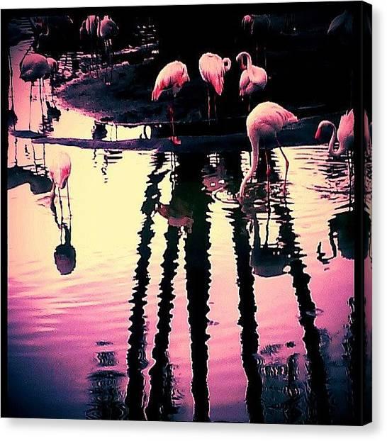 Flamingos Canvas Print - #flamingos, #birds, #palmtrees by Melissa Hardecker