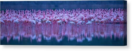 Water Birds Canvas Print - Flamingos by David Hua