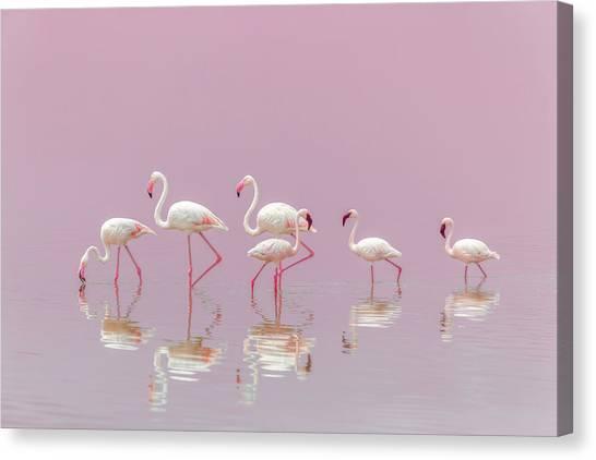 Flamingos Canvas Print by Eiji Itoyama