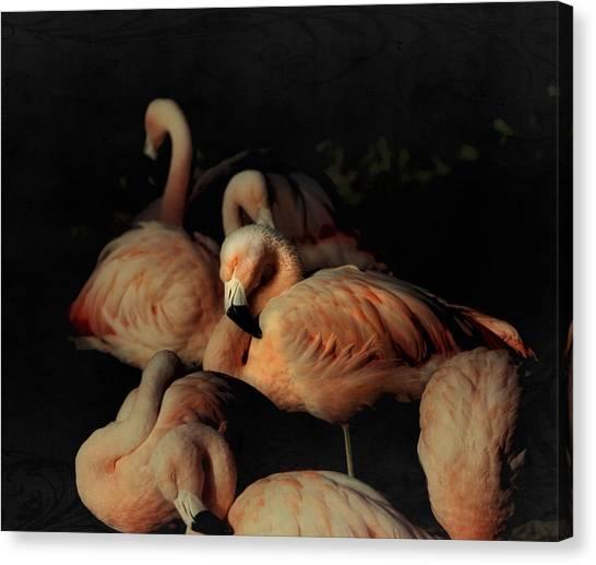 Flamingos In Repose Canvas Print