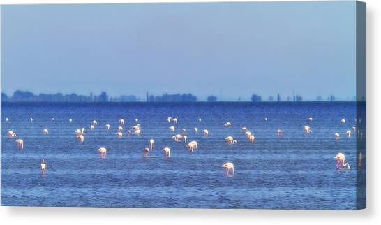 Flamingos In The Pond Canvas Print