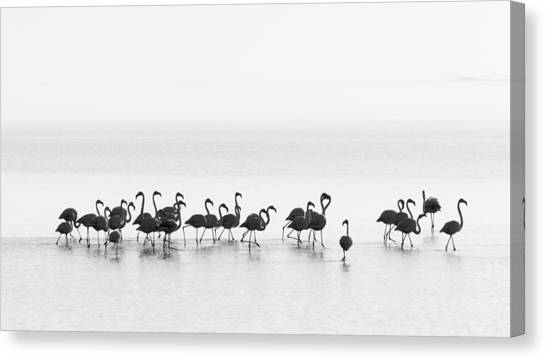 Flamingos Canvas Print - Flamingos by Joan Gil Raga