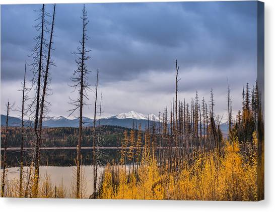 Flathead National Forest Canvas Print