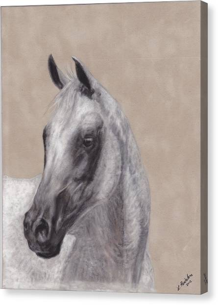 Arabian Canvas Print - Flea Bitten by Loreen Pantaleone