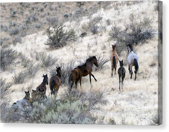 Wild Horse Canvas Print - Fleeing Up The Draw by Mike  Dawson